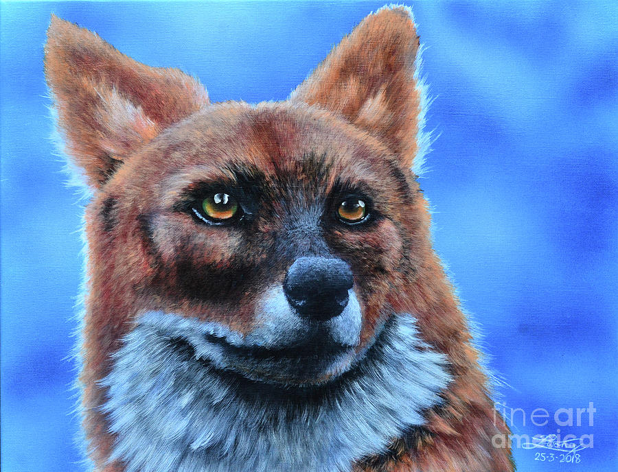 Dhole Painting - Asiatic Dhole by Elise Wong