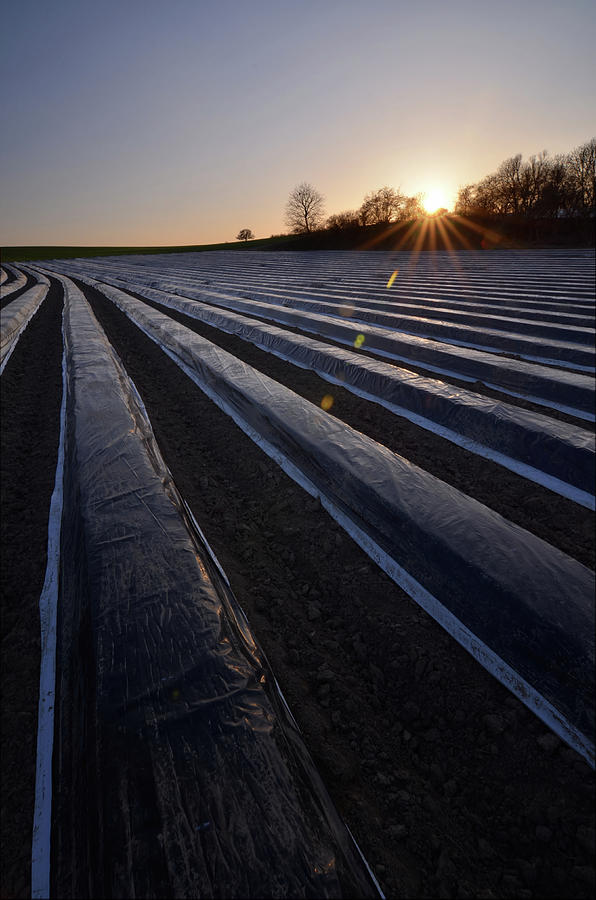 Asparagus Field Photograph by Andy Brandl