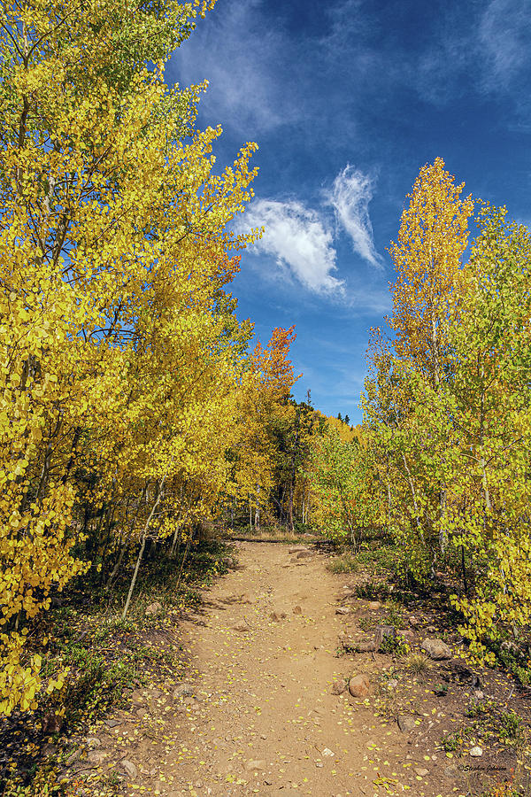 Aspen Trail with Butterfly Sky by Stephen Johnson