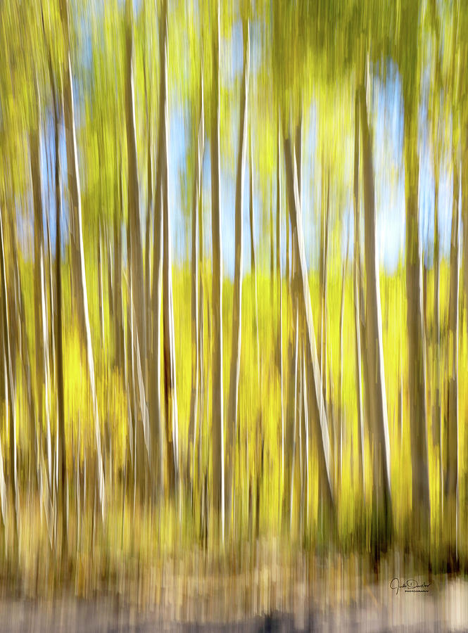 Aspen Trees Abstract by Judi Dressler