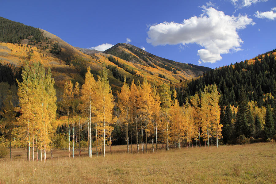 Aspen Trees In The Elk Mountains Photograph by John Kieffer