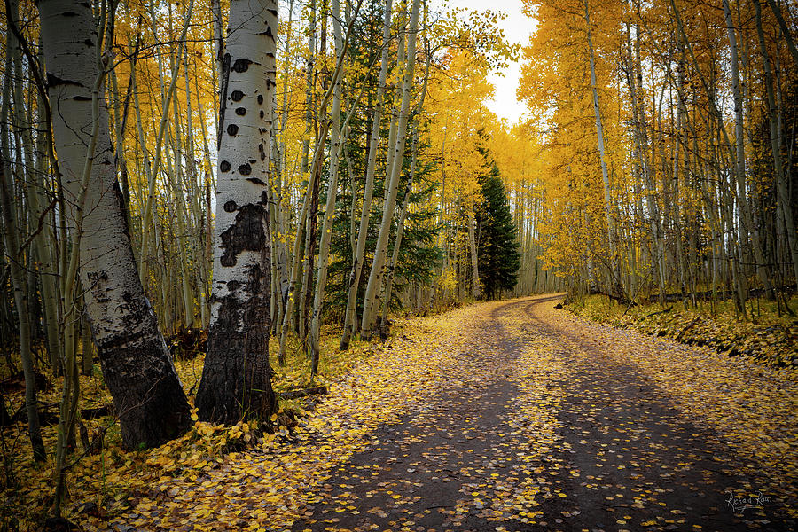 Aspen Way by Richard Raul Photography