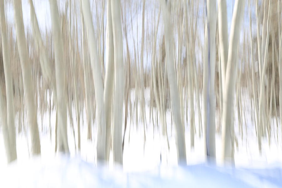 Dixie National Forest Photograph - Aspen Winter Abstract by Donna Kennedy