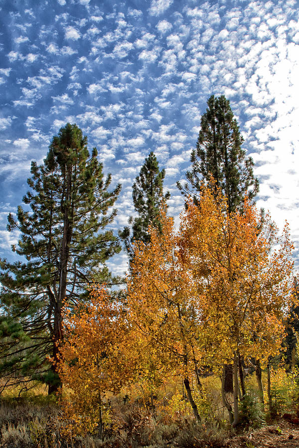 Aspens and Clouds by Tom Kelly
