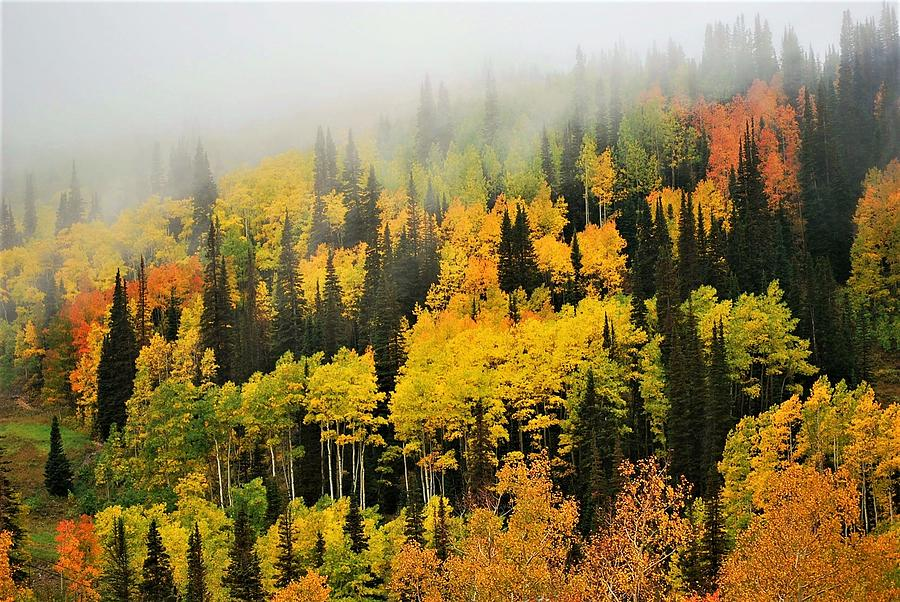 Aspens in Fog by Peter Mathios