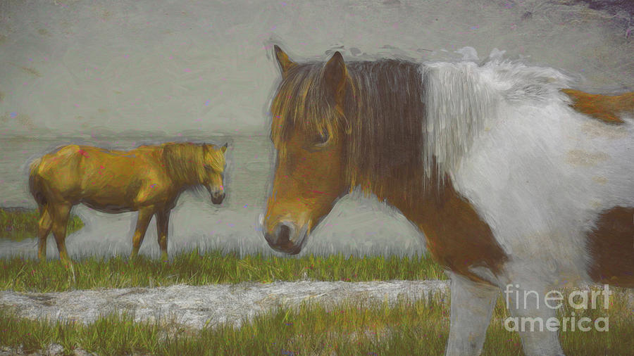 Assateague Pony #2 by Susan Lafleur