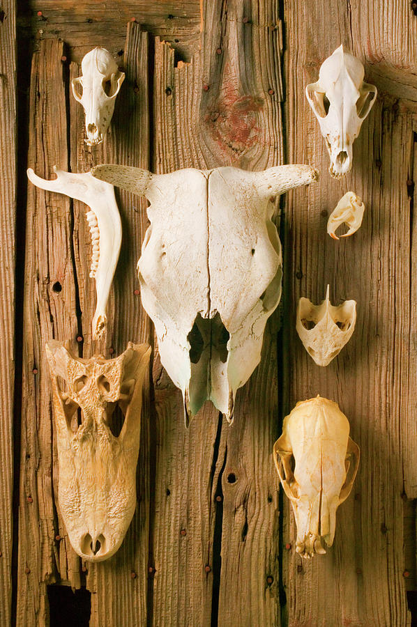 Horse Photograph - Assorted Animal Skulls On Wooden Fence by Garry Gay