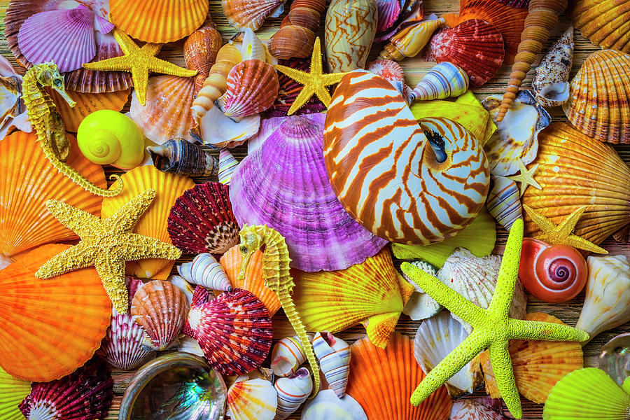 Assortment of Beautiful Seashells by Garry Gay