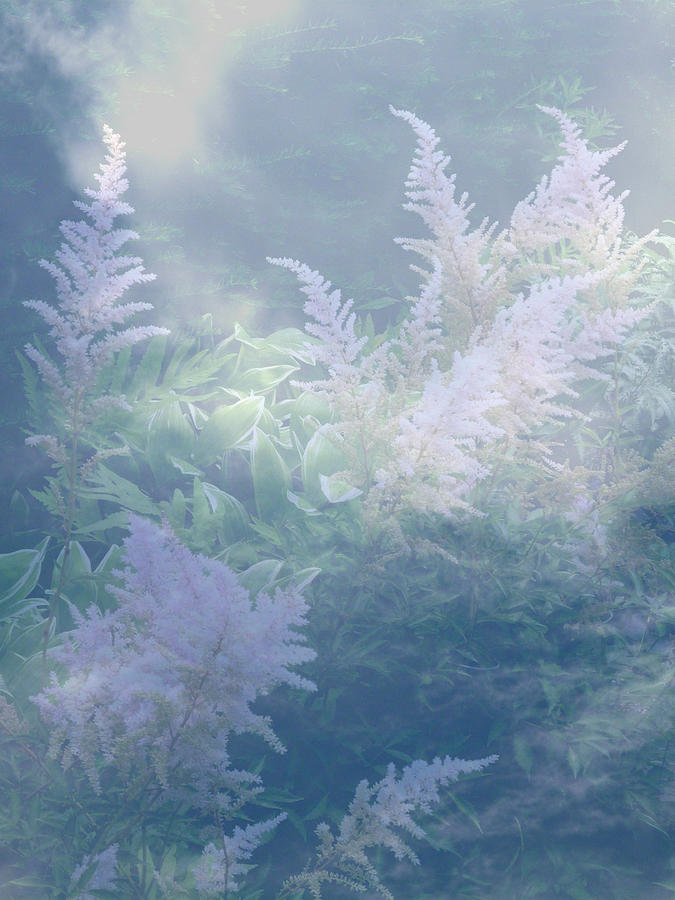 Astilbe Blue Mist by Michael McBrayer
