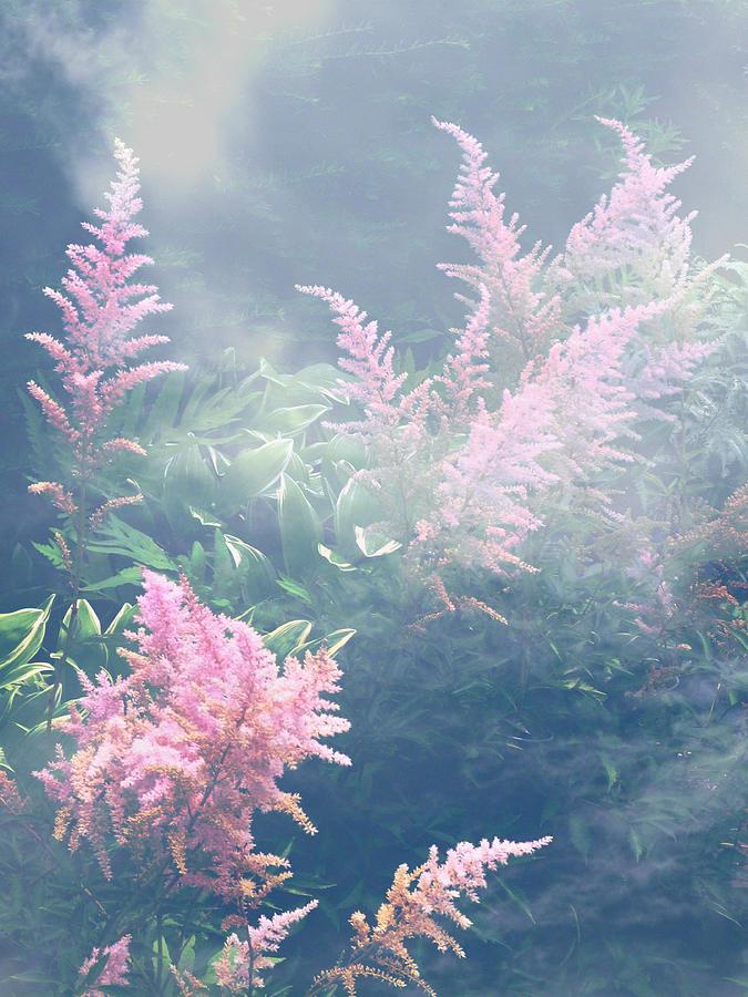 Astilbe Pink Fog by Michael McBrayer