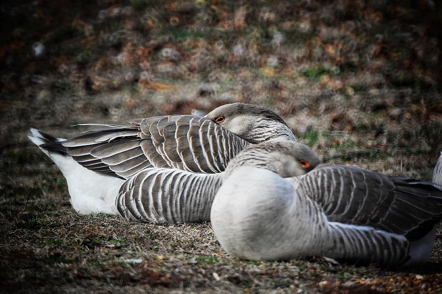 At Rest by DArcy Evans