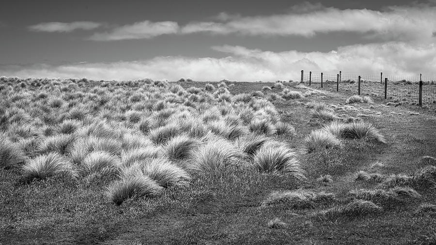 At Slope Point New Zealand BW by Joan Carroll