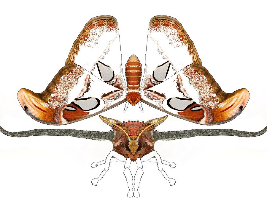 Stratton Digital Art - Atlas Moth2 by Joan Stratton