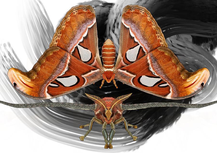 Stratton Digital Art - Atlas Moth8 by Joan Stratton