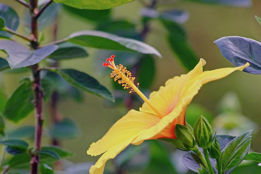 Flower Photograph - Attention by Gillis Cone