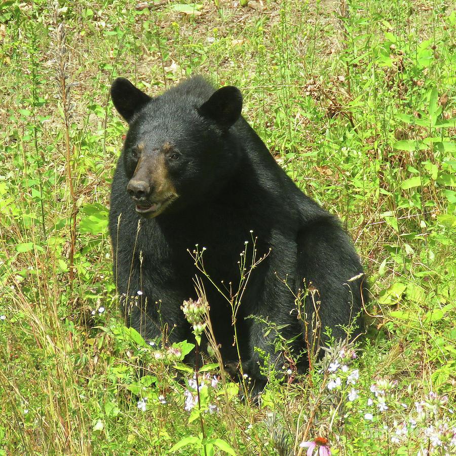 August Bear 2 by Amy E Fraser