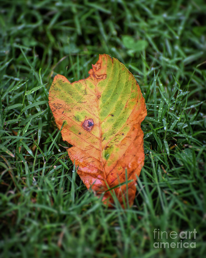 August Leaf 1  by Kerri Farley