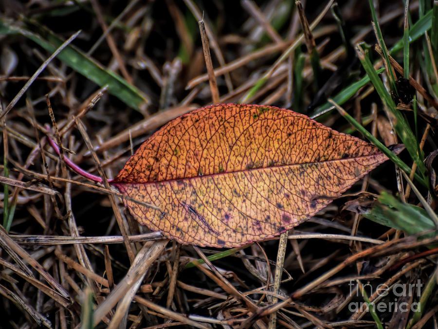August Leaf 2 by Kerri Farley