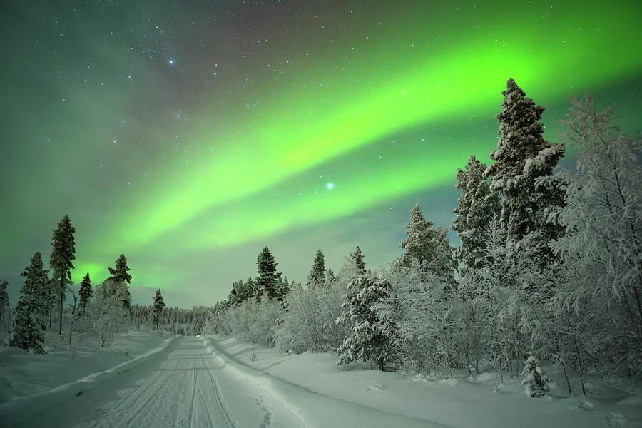 Aurora Borealis Over A Track Through Photograph by Sara winter