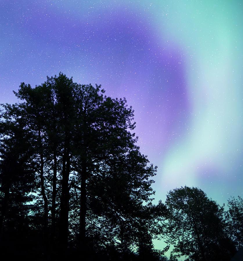 Aurora with Cottonwood trees by Michele Cornelius