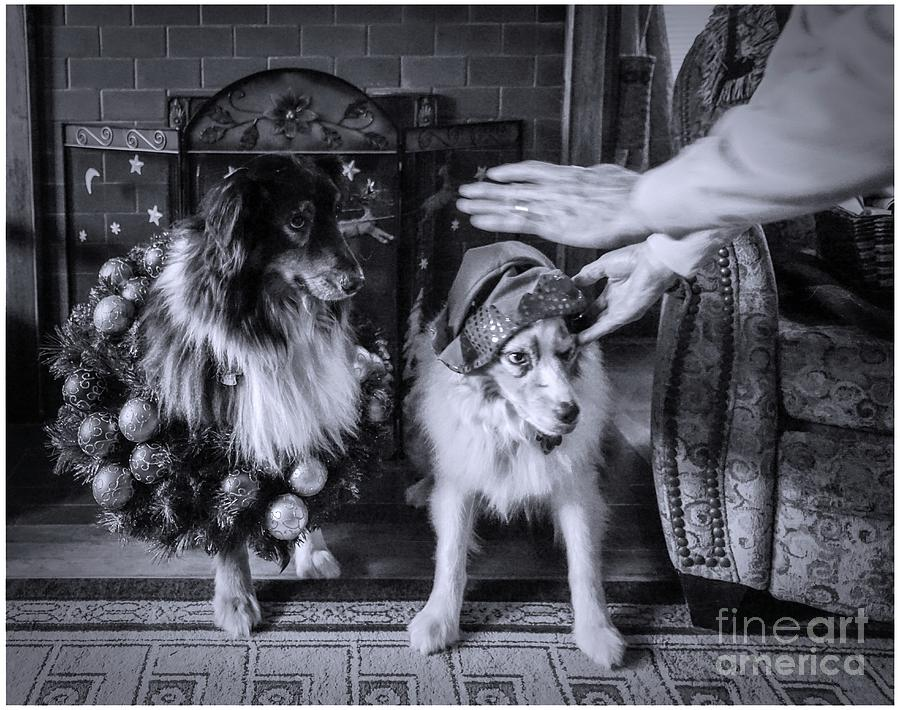 Aussie Christmas by Cathy Donohoue