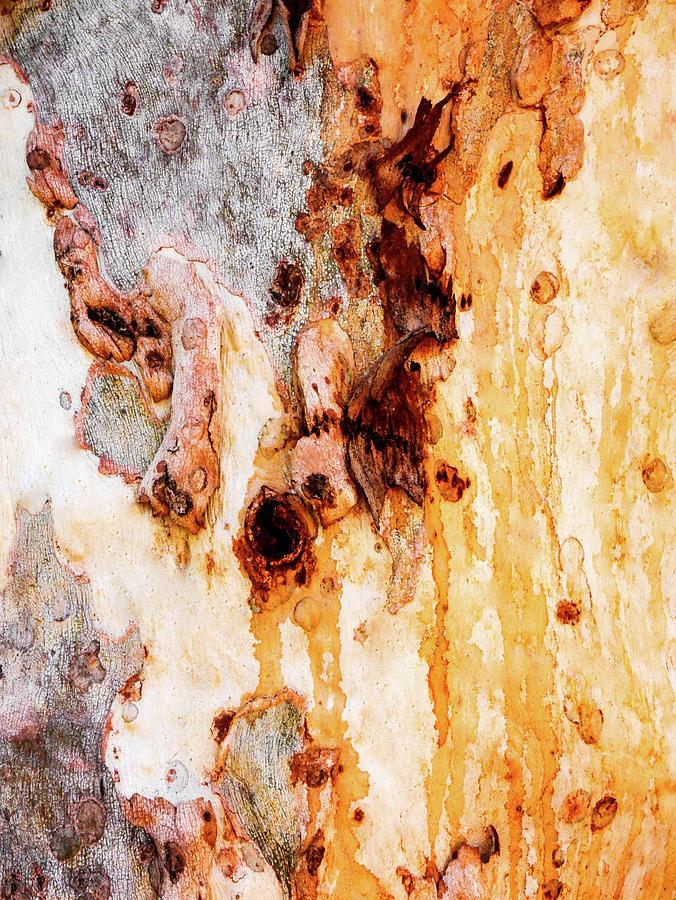 Aussie Gum Tree Bark - 46 by Lexa Harpell