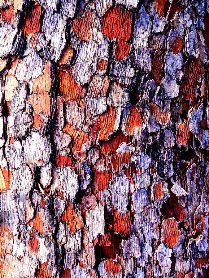 Aussie Tree Bark - 43 by Lexa Harpell
