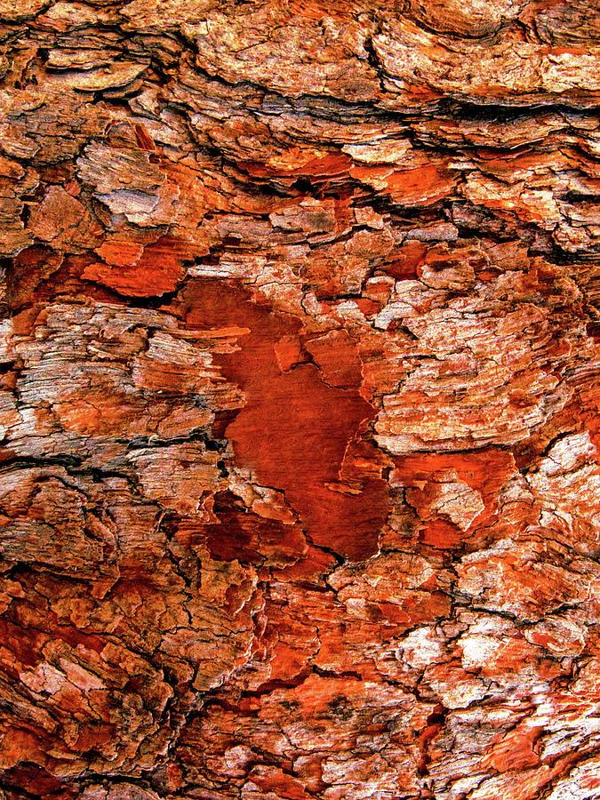 Aussie Tree Bark by Lexa Harpell