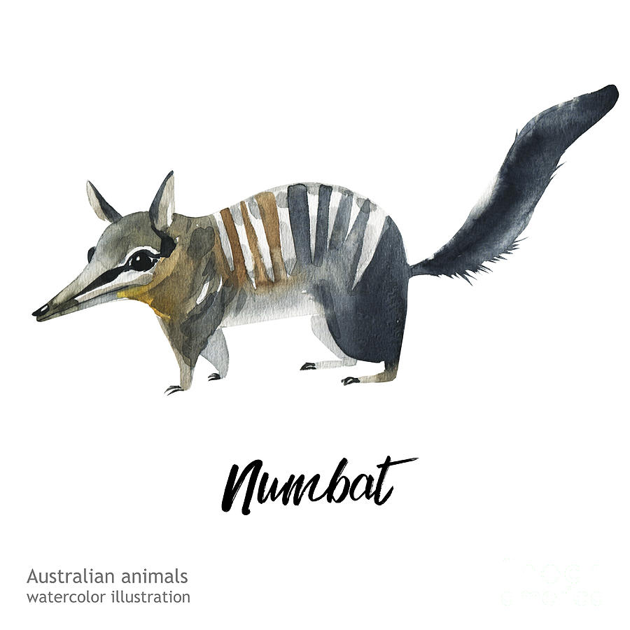Forest Digital Art - Australian Animals Watercolor by Kat branches