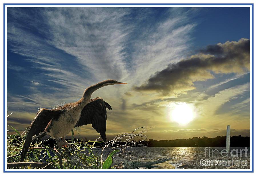 Birds Photograph - Australian Darter drying by Klaus Jaritz