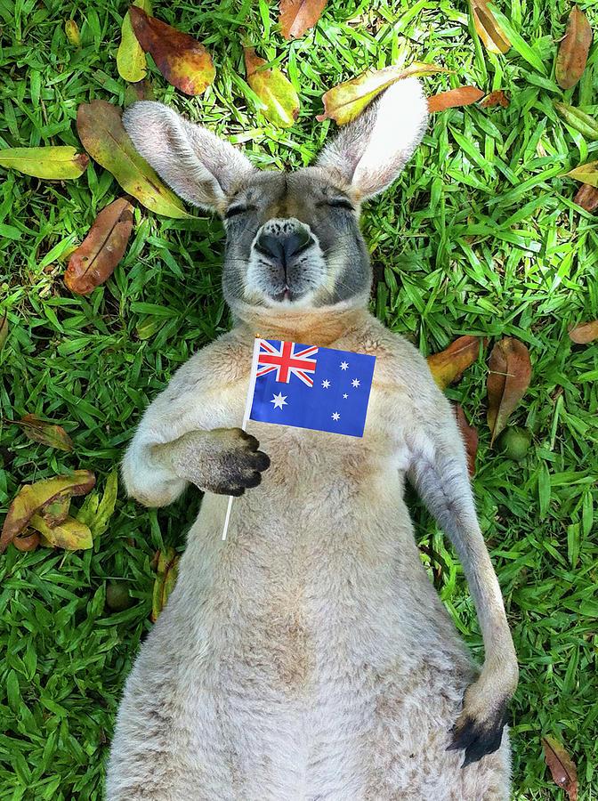 Australian Kangaroo Photograph by Mb Photography