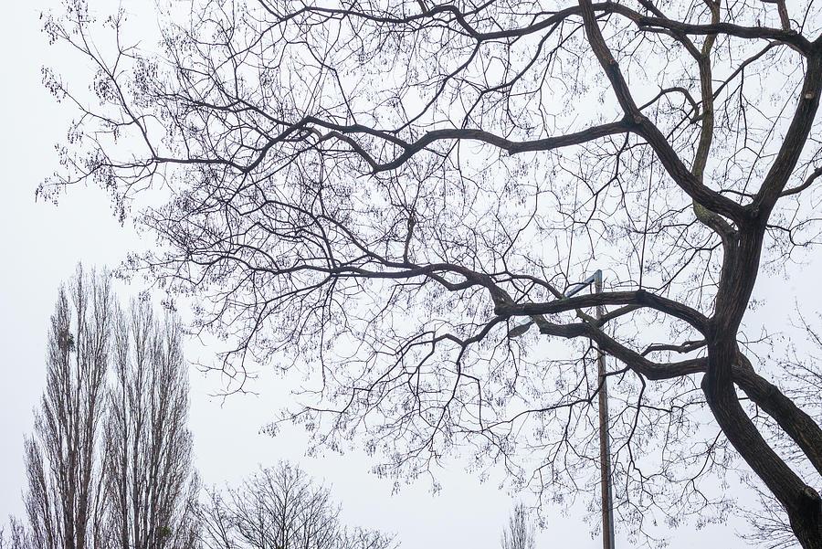 Austria Vienna Trees In Winter By Walter Bibikow