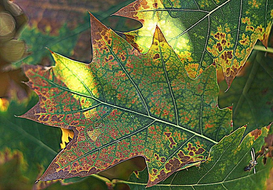 Autumn 1 by Jolly Van der Velden