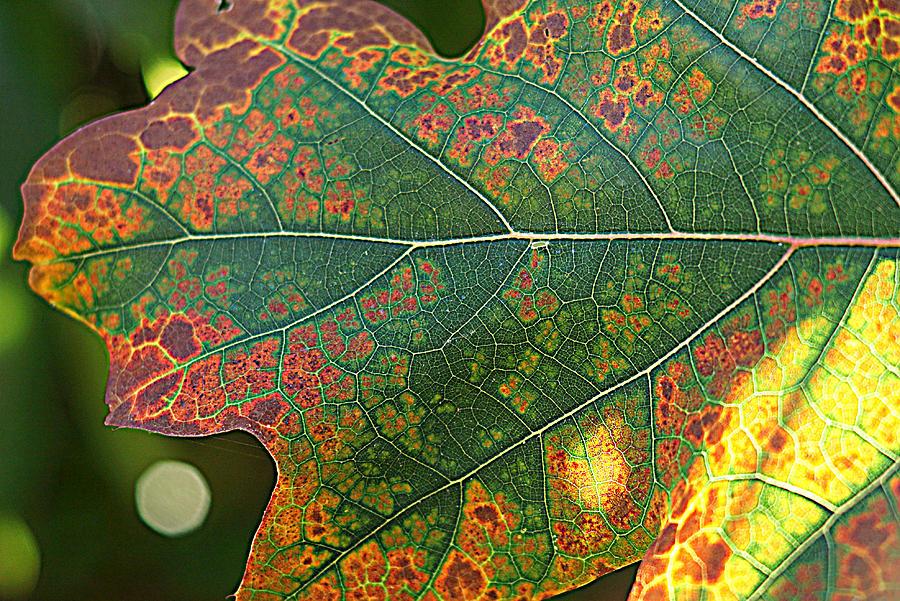 autumn 2 by Jolly Van der Velden