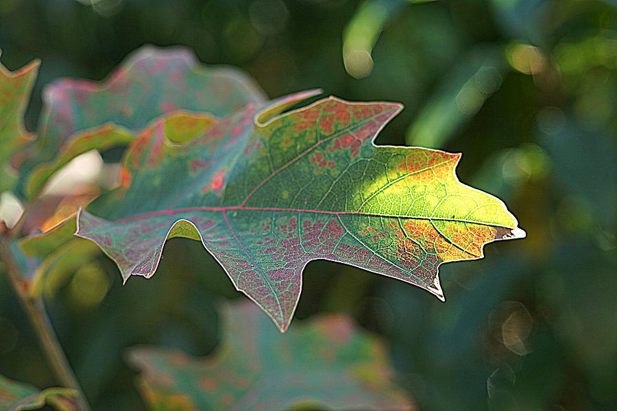 autumn 3 by Jolly Van der Velden