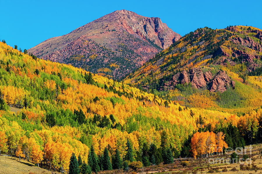 Pikes Peak Photograph - Autumn Aspen Leaves of Pikes Peak by Steven Krull