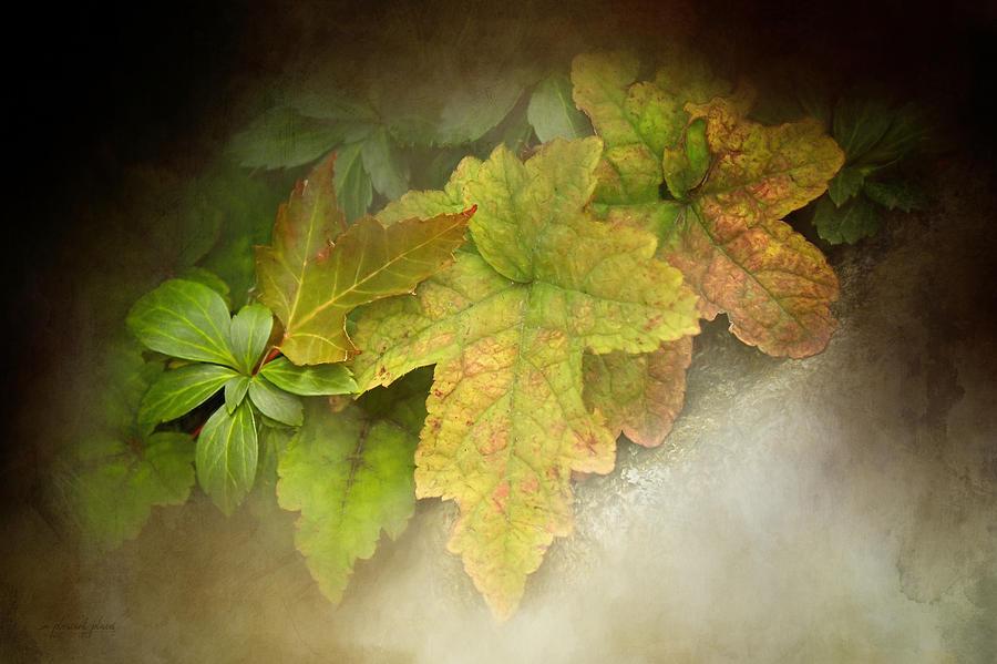 Autumn Assortment by Joanna Kovalcsik