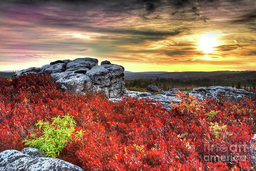 Autumn at Dolly Sods Bear Rocks by Dan Carmichael
