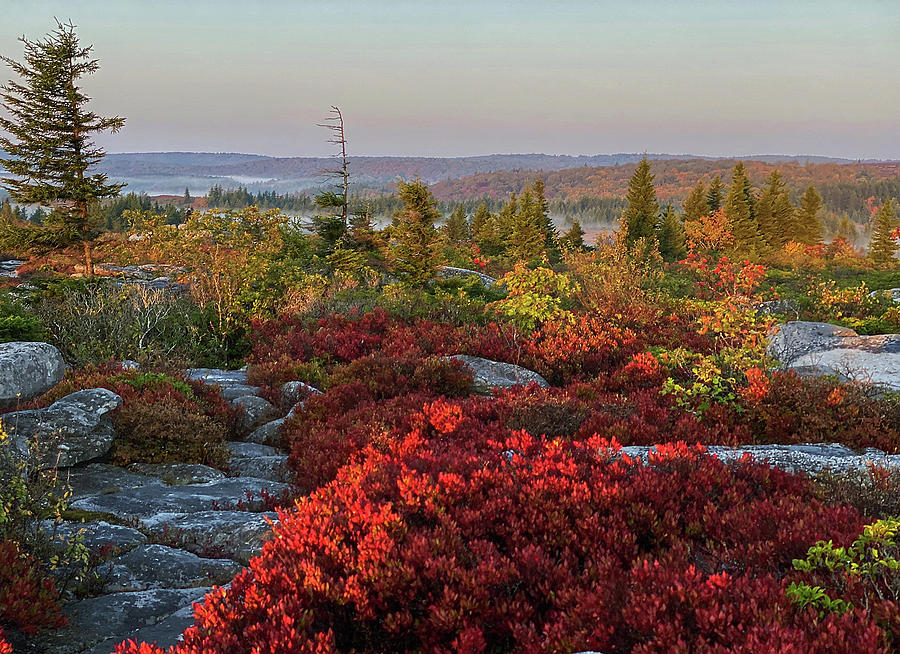 Autumn at Dolly Sods by Lori Coleman