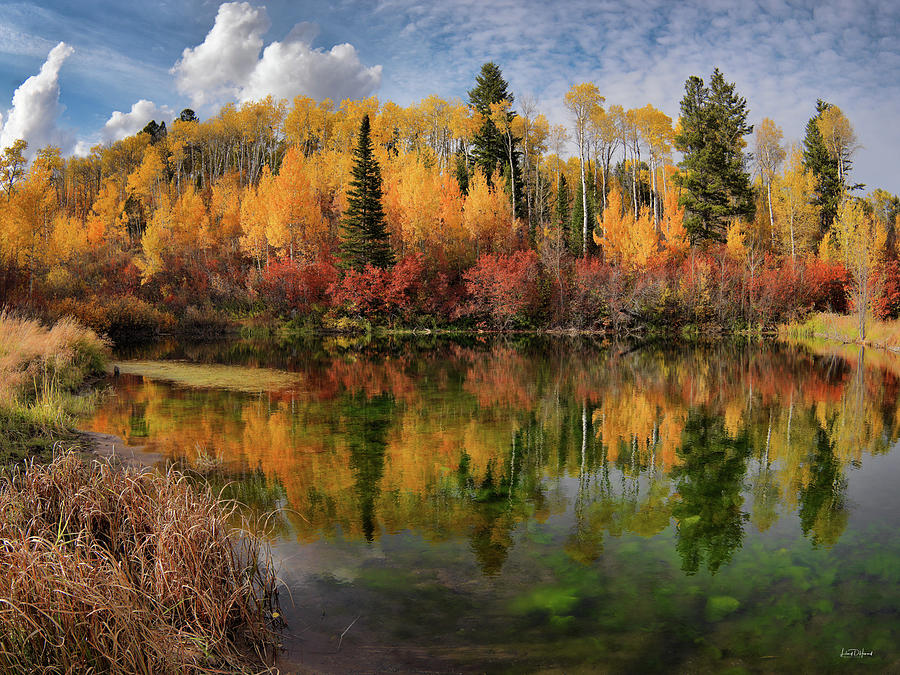 Aspen Forest Photograph - Autumn At Its Best by Leland D Howard