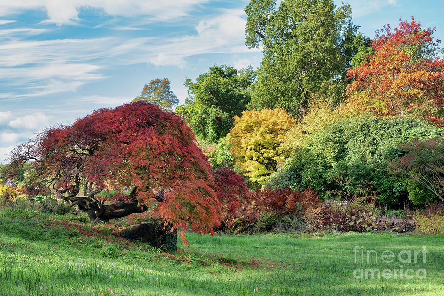 Autumn at RHS Wisley Gardens by Tim Gainey