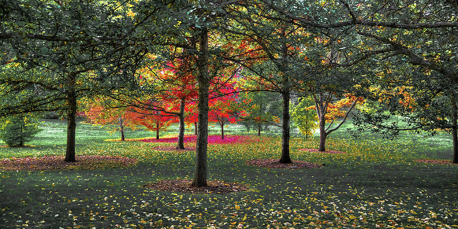 Autumn at the Arboretum by David Patterson