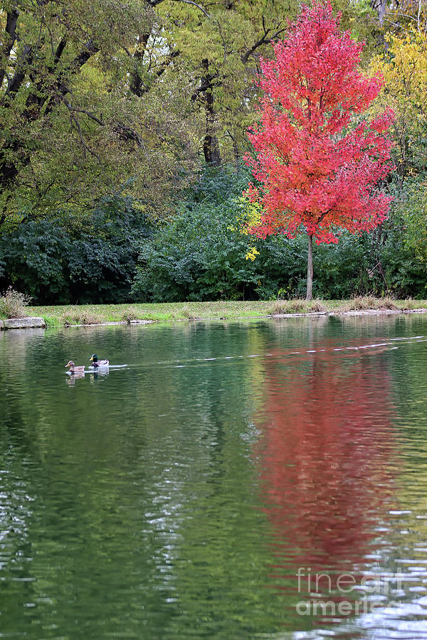 Autumn at the Pond by Karen Adams