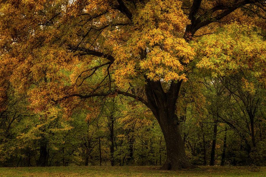 Autumn Beauty by Scott Bean