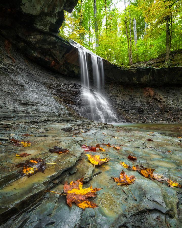 Autumn Beginnings by Matt Hammerstein