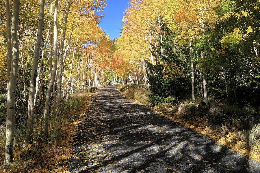 Fishlake National Forest Photograph - Autumn Bliss by Donna Kennedy