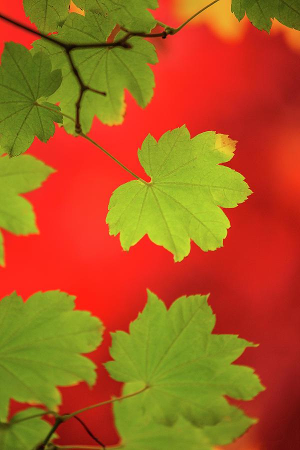 Autumn by Bob Cournoyer