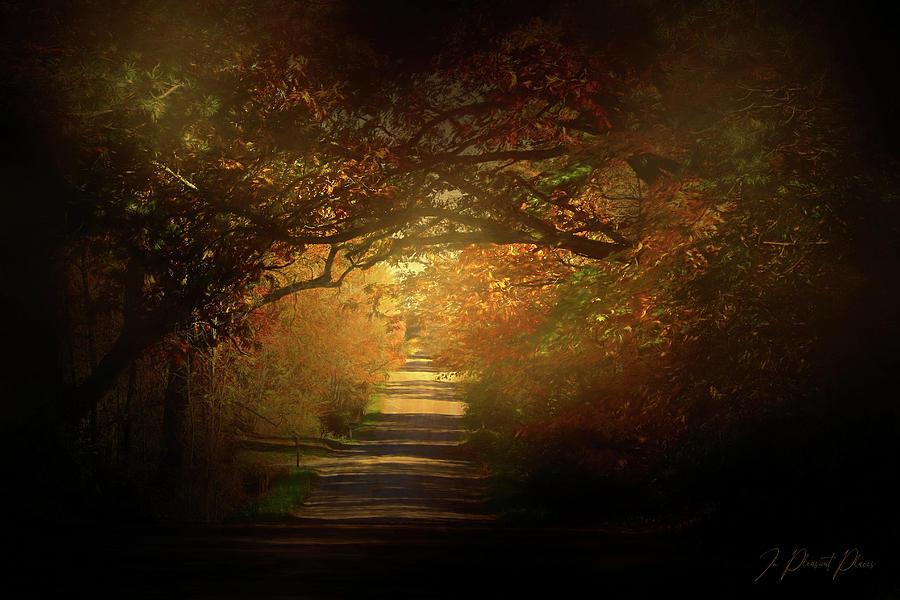 Autumn Boughs by Joanna Kovalcsik