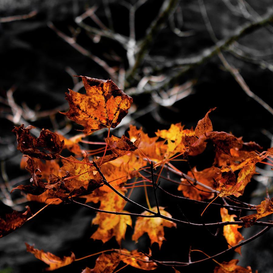 Autumn Photograph - Autumn Brown by Christine Buckley