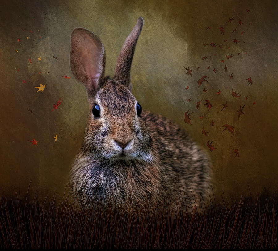 Autumn Bunny by Kelley Parker